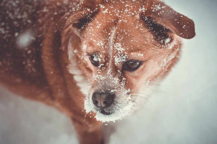 snow dog Winter Animal Themes Close-up Day Dog Domestic Animals Looking At Camera Mammal Nature No People One Animal Outdoors Pets Portrait Snow Water