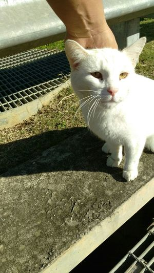 Hanging Out White Cat Hand Hello World Afternoon Cat