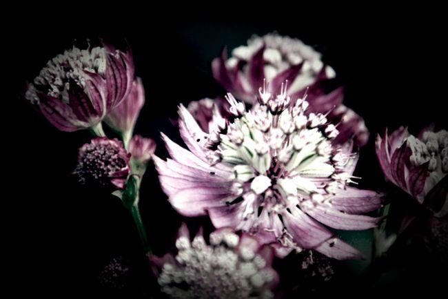 Wild Flowers EyeEm Nature Lover Flowers The Illusionist - 2014 EyeEm Awards