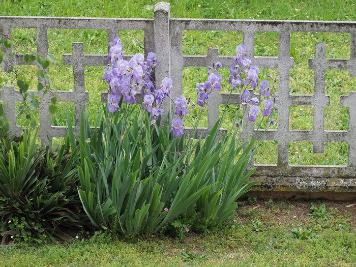View of purple flowering plants in garden