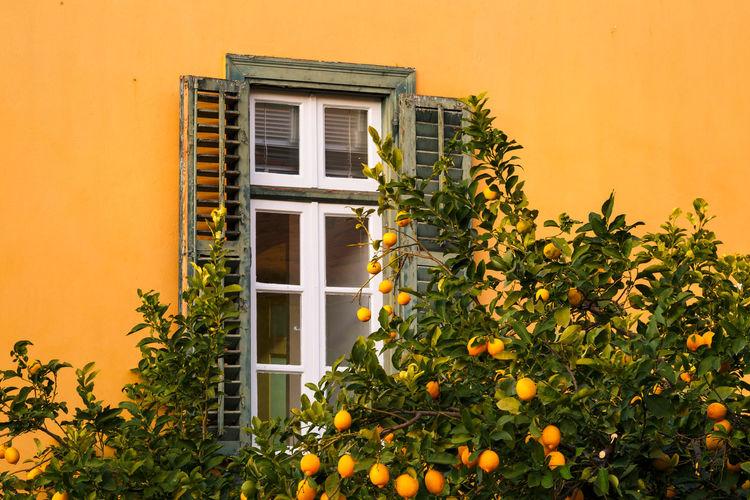 Yellow flowers on window of house