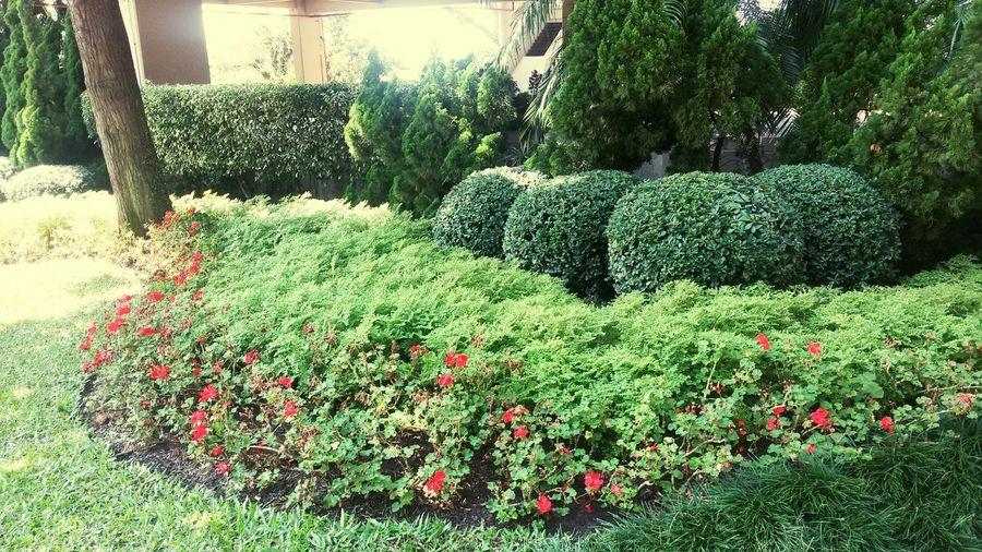Nossos jardins.😁💋