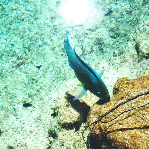 Blue fish Fish Sea Life Bluefish Chankanaab Park Underwater Nature UnderSea Cozumelmexico Beauty In Nature Swimming Ocean
