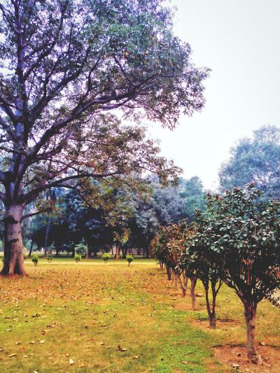 Tree Nature Freshness Landscape Grass Beauty In Nature First Eyeem Photo Icredibleindia Heritage Site Green Nature Naturelovers Naturephotography Humayun'sTomb