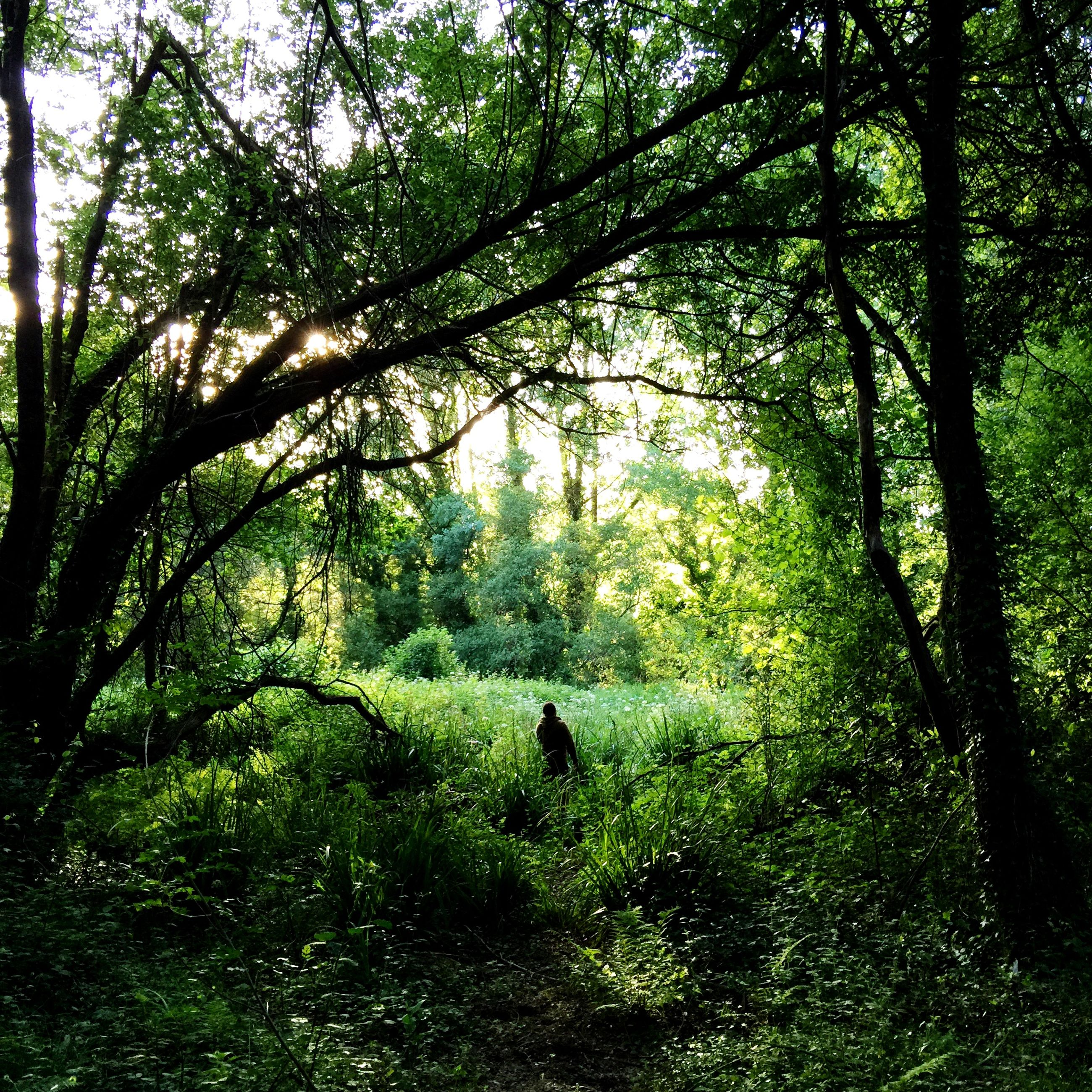 tree, green color, growth, forest, branch, tranquility, nature, lush foliage, tree trunk, grass, leisure activity, tranquil scene, men, beauty in nature, lifestyles, walking, full length, green