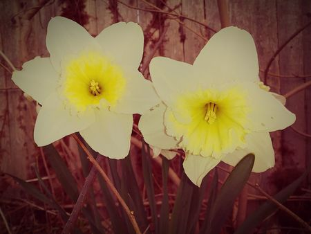 SEASONS CHANGED Perennial Seasonal Photography New England Nature Newpicture Rhode Island  EyeEmNewHere EyeEm Nature Lover Eye4photography  EyeEm Best Shots - Nature Flowrrs And Plants Fragility No People Close-up Outdoors Freshness Springtime