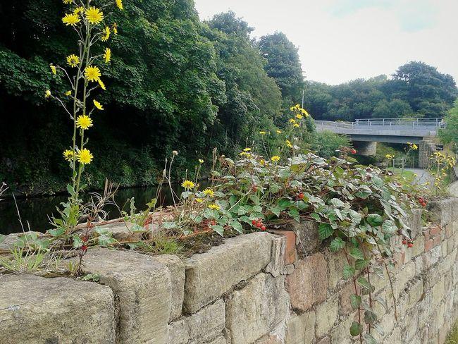 Blackberryphoto Celandinepoppy Autumn Colors Canal Sunshine Jam Wall Flower Lesser Celendine Redberries Mothernature