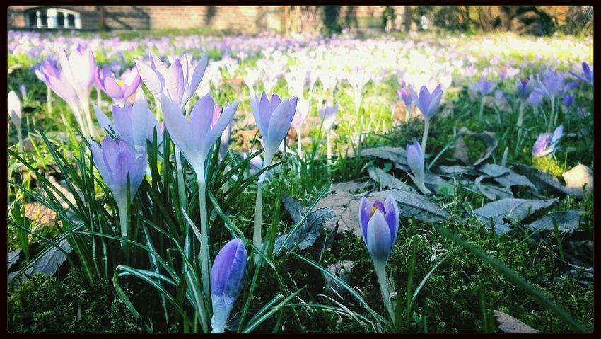 Frühling???