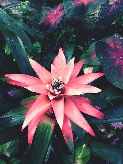 Photography Streetphotography Flower EyeEmyon botanical garden.