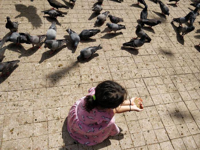 High angle view of girl feeding birds