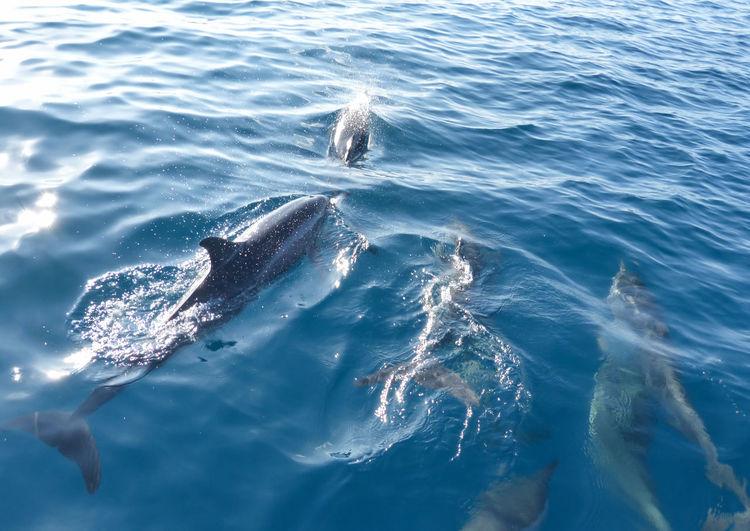 Define accompany a tour boat in the maldives