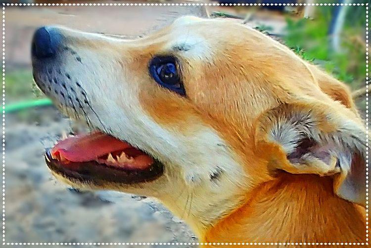 Pets Water Dog