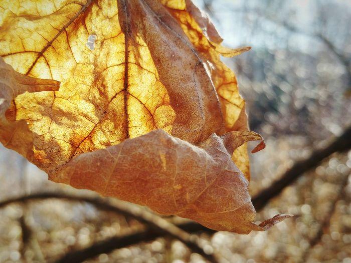 Close-up of dry autumn leaf on tree
