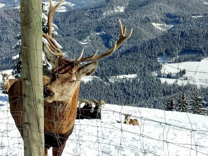 Winterscape Deer Hirsch Trees Winterscapes Winterscapes Wintertime Winter Wonderland Close Up Nature Close Up Photography Hirschgeweih