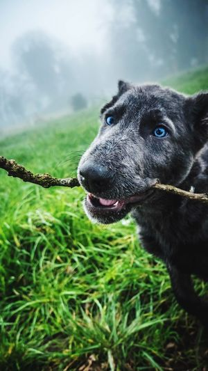 Fetch... - One Animal Domestic Animals Animal Themes Pets Dog Mammal No People Green Color Close-up Outdoors Nature Day Tree Sky Germanshepherd Puppy Puppy Love Fetch