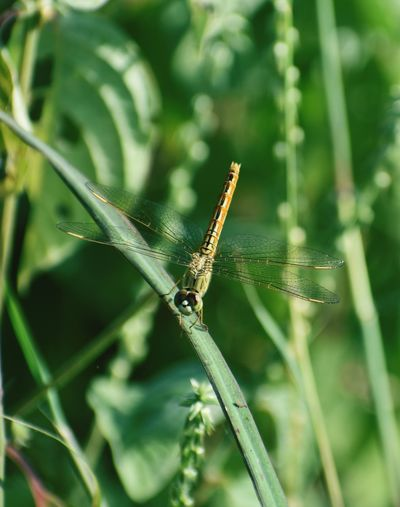 helicopter Helicopter Photography Helicopter View  Grasshopper On Plant Damselfly Insect Leaf Close-up Animal Themes Green Color Plant Grasshopper Blade Of Grass