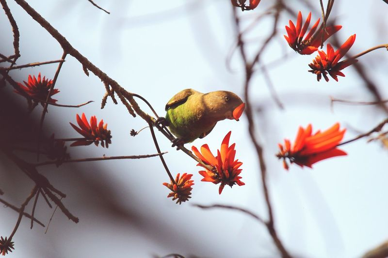 Africa African Beauty Birds Birds_collection Nature Spring Springtime Nikonphotography Parrot UrbanSpringFever Easter Ready Trees Tree Tree_collection  Birds_n_branches Branches Eating Beauty In Nature Theessenceofsummer
