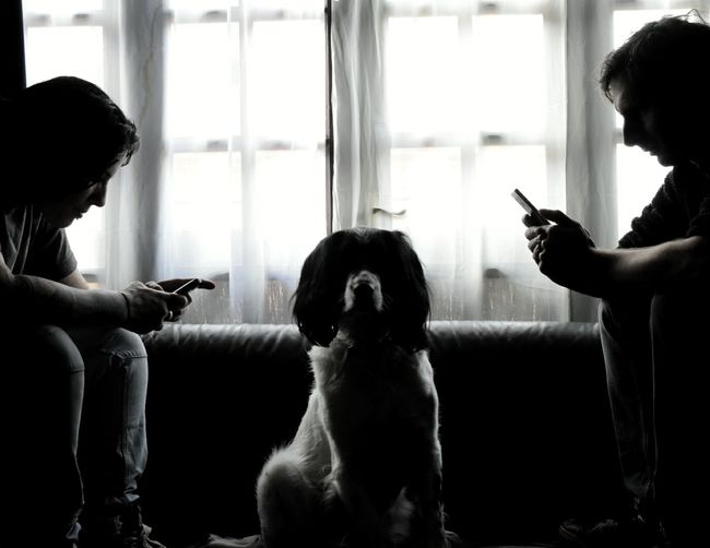 Men Using Smart Phones And Ignoring Dog