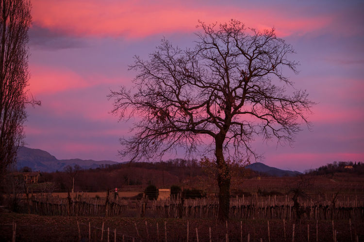 Awesome sunset with beautiful warm colors and bare tree Vineyard Sky Sunset Cloud - Sky Scenics - Nature Tranquil Scene Tranquility Landscape Nature Outdoors Land Franciacorta Tramonto Vigneti Tree Hill Clouds Winery Erbusco Italy