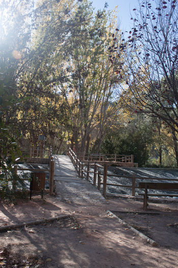 Autumn Beauty In Nature Branch Day Diminishing Perspective Empty Road Fence Footbridge Footpath Growth Long Magic Narrow Nature No People Outdoors Railing Scenics Solitude Sun Through The Trees The Way Forward Tranquil Scene Tranquility Tree Tree Trunk