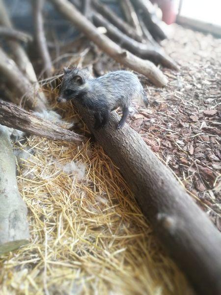Animals In The Wild Animal Wildlife Nature Raccoon Dog Raccoon Lover
