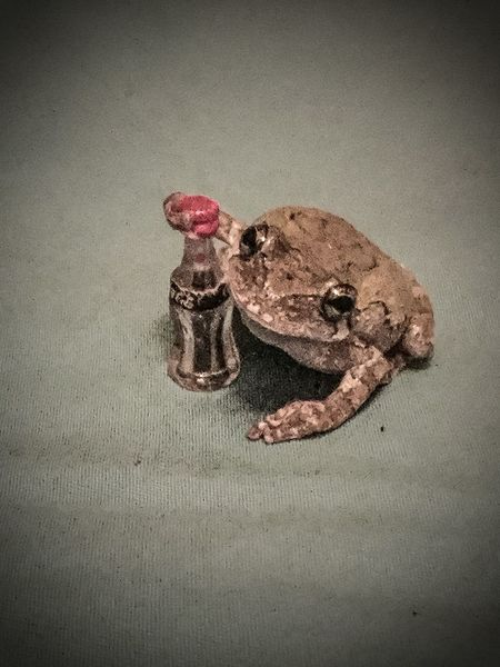 Is it a large frog or small coke? Tree Frog Coke Frog Cola Coca Cola Beverage Small Drink Zoology No People Animal Head  Close-up Tiny Drink Up Day