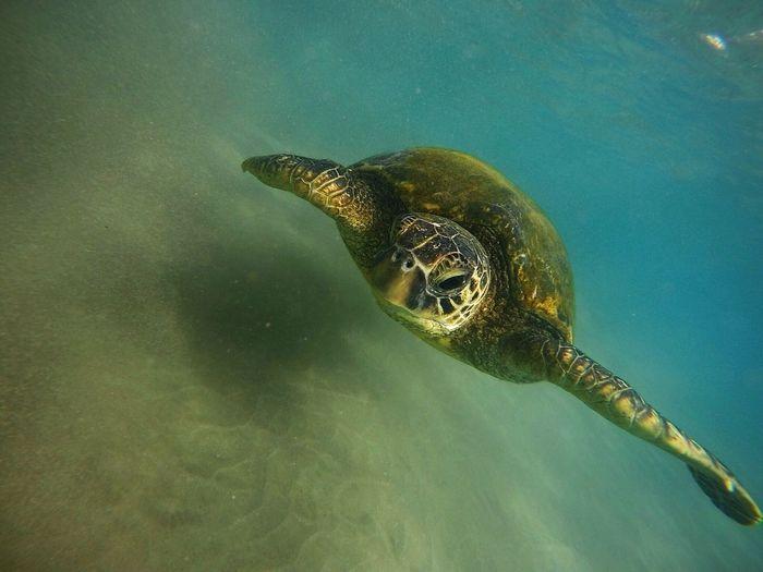 Close-up of turtle underwater