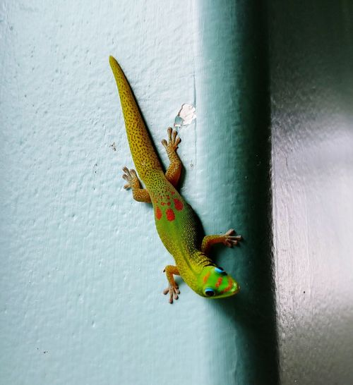 Hey Gecko Animal Themes Day Reptile Green Color Close-up EyeEmNewHere