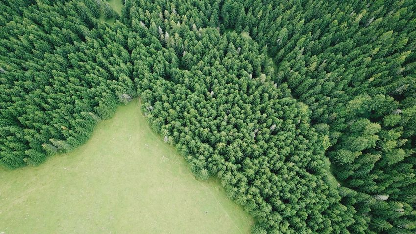 Carpathians Carpathian Mountains Romania Wood From Above Aerial Tree Aerial View High Angle View Coniferous Tree Green Wood Aerial Wood Backgrounds Field Green Color Plant Landscape Green