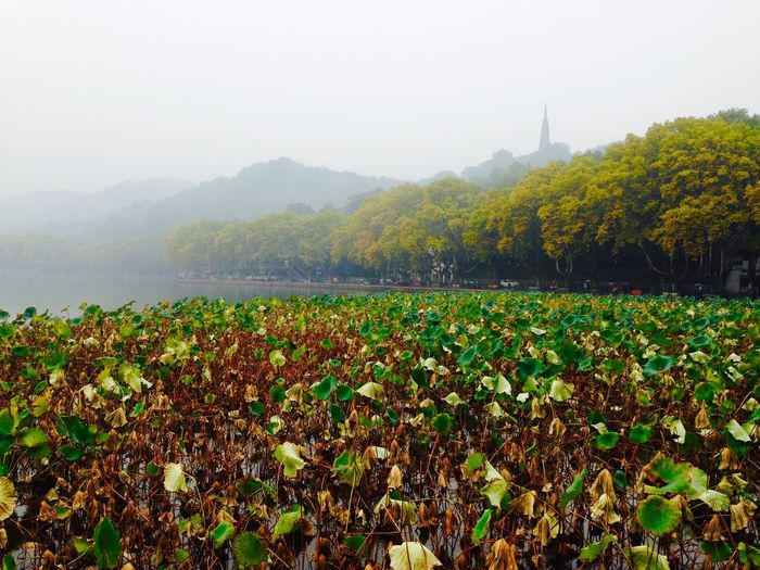 Before Winter Hangzhou Misty Day Small Rain Softness Sweet Color The West Lake