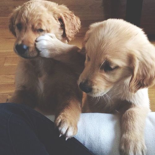 моя любовь собаки Любимые😙😙😗😗😘😘😍