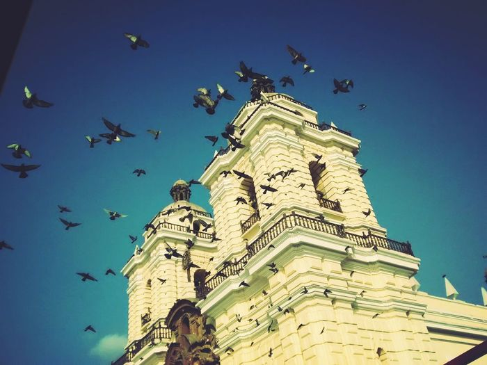 Free as a bird... 😏 Doves Dove Flying Flying High Flying Downtown Downtown Lima Lima Taking Photos Cityscape City View  Being A Tourist Tourism Enjoying Life EyeEmbestshots Eye4photography  EyeEm Best Shots EyeEmBestPics Popular Photos Check This Out Showcase: January Free As A Bird Photographic Memory