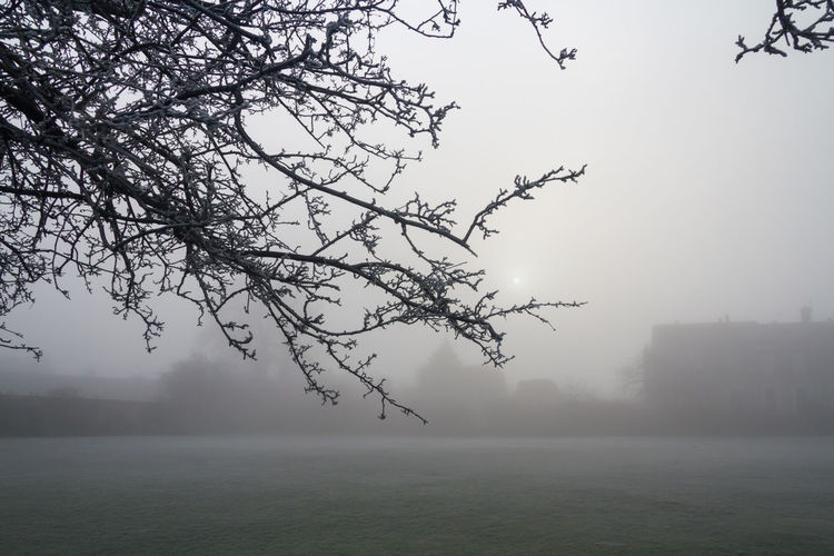 Misty Winter Landscape Atmospheric Bare Branches Beauty In Nature Cold Day Fog Horizontal Landscape Mist Nature No People Outdoors Outlines Scenics Shapes Tranquility Tree Tree Winter