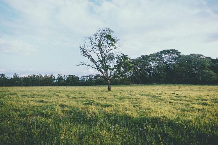 Nature's Diversities Tranquility Tree Tree Trees VSCO Vscocam