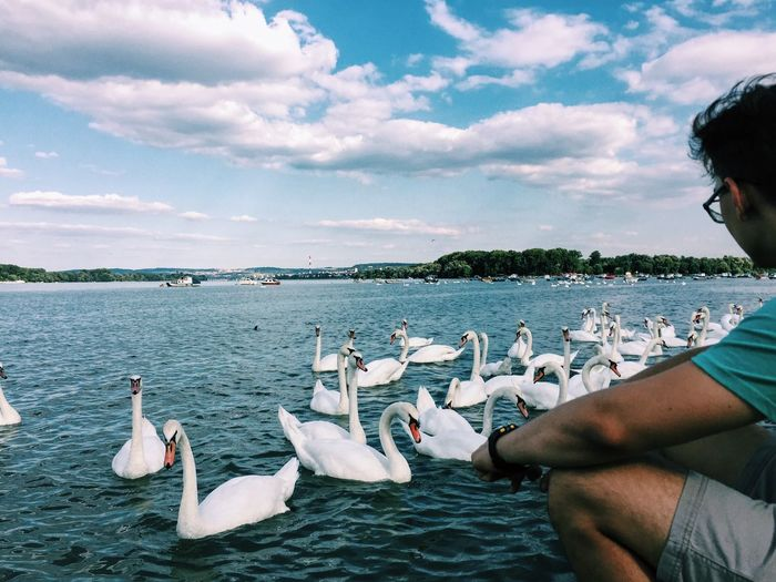 Man looking at swans swimming in lake against sky