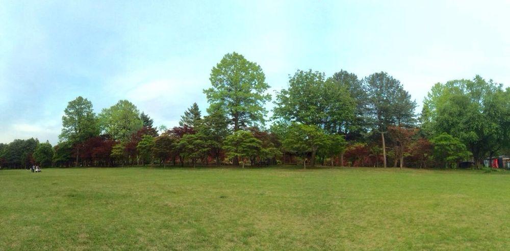 Nami Island Nature Arboretum Tree Sky Holiday Happy