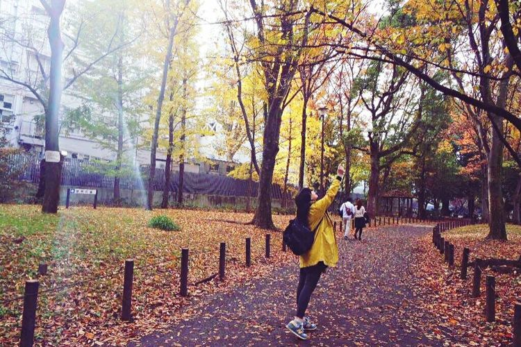 Autumn Beauty In Nature Autumn Leaves Tree Rear View Lifestyles Nature Walking Japan Fall Yellow Travel
