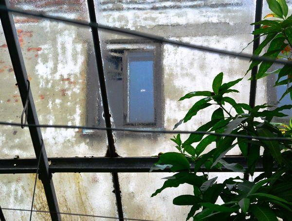 No People Day Windows вид из теплицы Стекло