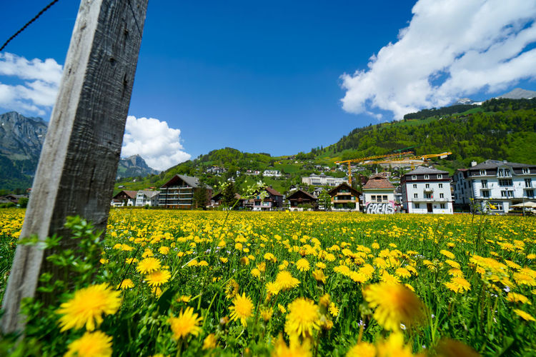 beautiful engelberg town and village Field Flowers Mount Titlis Switzerland🇨🇭 Vacations Alps Architecture Beauty In Nature Building Building Exterior Built Structure Cloud - Sky Day Engelberg Field Flower Flowering Plant Growth Land Landscape Lavender Mountain Nature No People Outdoors Plant Rejuvenation River Rotary Rural Scene Scenics Scenics - Nature Sky Snow Sunny Day Travel Destinations Tree Truebsee Yellow