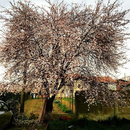 Primavera Marzo Aspettandoilsole Alberiinfiore