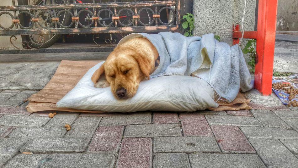 Dog Hunt Dog Love Dog Sleeping