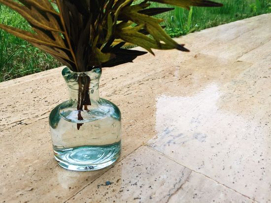 Beautiful Eco Green Green Color Natural Nature Rain Vase Biology Colorful Cute Day Eco System Ecology Flora Glass Growth Indoors  Little Vase Nature Nature_collection No People Plant Shadow Table
