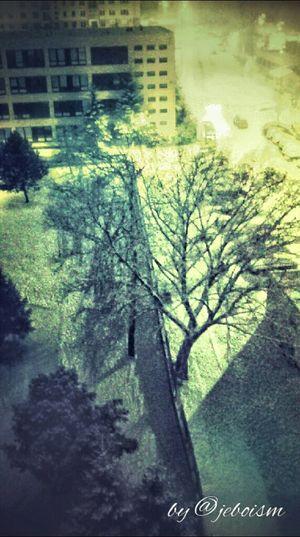 Street Night Streetphotography Trees Taking Photos Winter Photo Night Lights Snow From My Window My Town Bardejov
