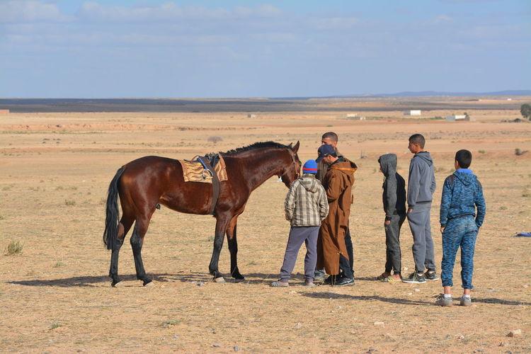Horses on field against sky