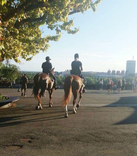 Horseriding Cavalry