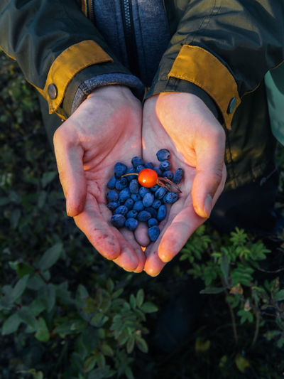 Handful Food One Person Food And Drink Healthy Eating Real People Fruit Human Hand Holding Hand Freshness Wellbeing Berry Fruit Day Nature Human Body Part Field Lifestyles Men High Angle View Hands Cupped Outdoors Ripe