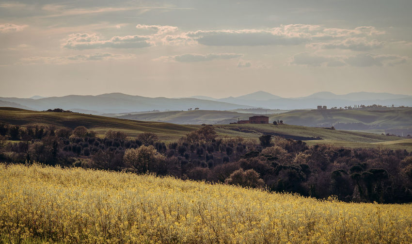 Val D 'Orcia Tuscany Landscape Scenics - Nature Tranquil Scene Nature Idyllic Grass Outdoors Mountain Range Cloud - Sky Land Plant Sunset Spring Yellow Flower Field Treescape Hills Mountains Background