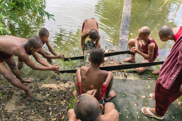 Novice Monks Cross Saws Firewood Myanmar