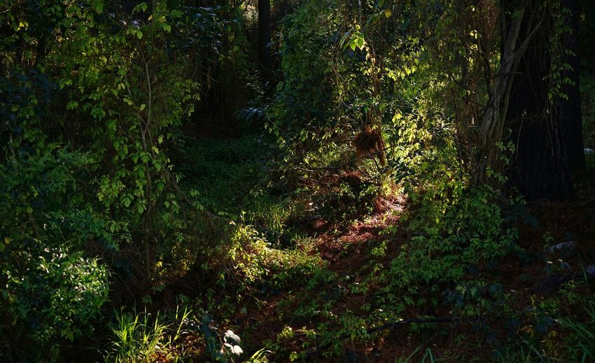 Manual Mode Photography Zeiss35mm Sony A7 Early Spring Morning Light Still Life Mystery Poison Ivy Enchanted Forest