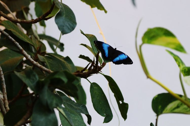 One Animal Leaf Animals In The Wild Animal Themes Insect Plant Green Color Animal Wildlife No People Nature Day Beauty In Nature Outdoors